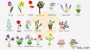 Flower Names With Pictures Google Search Flower Names List Of Flowers Flowers Names And Pictures