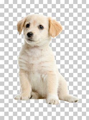 Puppy Png Images Puppy Clipart Free Download Labrador Retriever Puppies Boston Terrier Puppy Yellow Labrador Retriever