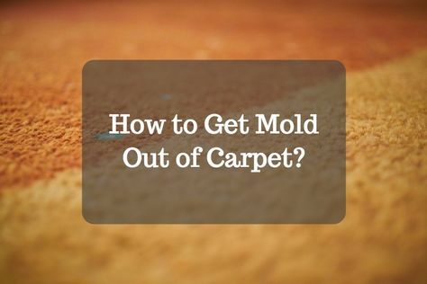 814923121b5e4ce16876e5ed4d791266 - How To Get Rid Of Mold Out Of Carpet