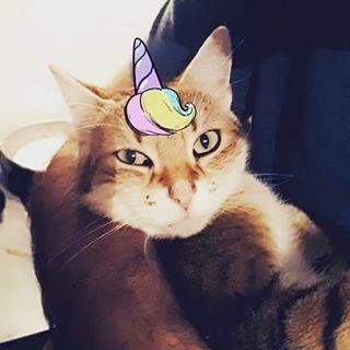 Qui Est Le Qui A Decide Que Les Filtres Snapchat Marchait Avec Les Chats Vous Connaissez Pas Ma Maitresse Au Secours R Animals Cats Instagram