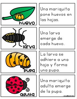 Los Insectos Actividades De By La Colita De Rana Teachers Pay Teachers Narrative Writing Prompts Literacy Activities Narrative Writing