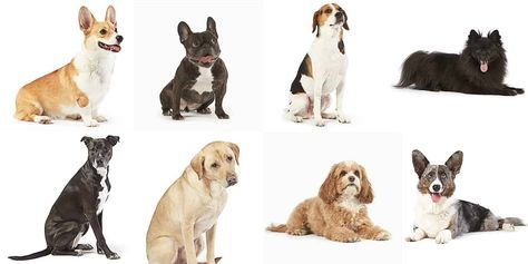 Meet the Dogs of Amazon Who Helped Soften the Blow While the