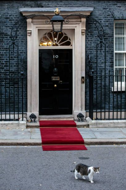 Larry The Downing Street Cat Walks Past Number 10 Ahead Of The