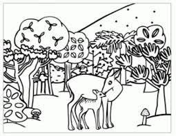 Resultado De Imagen Para Imagenes De Plantas Arboles Y Animales Para