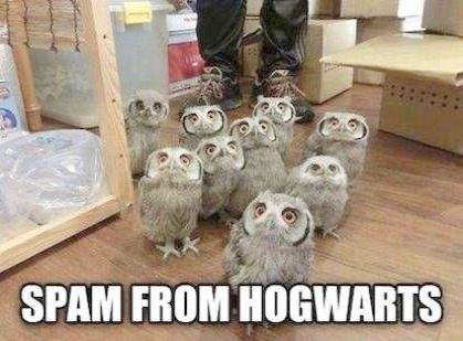 Harry Potter Spells Reparo Not Harry Potter Owl Name Harry Potter Memes Dumbledore And Voldemort Harry Potter Jokes Harry Potter Memes Harry Potter Funny
