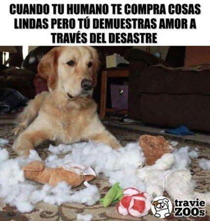 43 Trendy Memes De Amor Perritos Dog Quotes Love Dog Quotes Grumpy Cat Humor