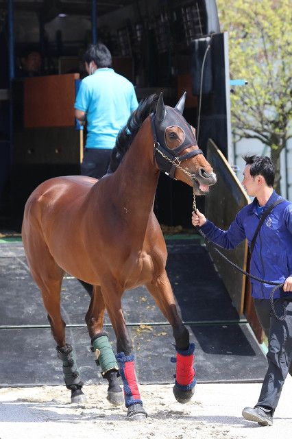 ロードカナロア産駒のアーモンドアイ 牝3 阪神競馬場に到着した 桜花賞 馬 アーモンドアイ 馬の写真