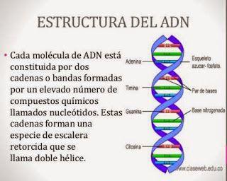 ácidos Nucleicos Estructura Del Adn Molecula De Adn
