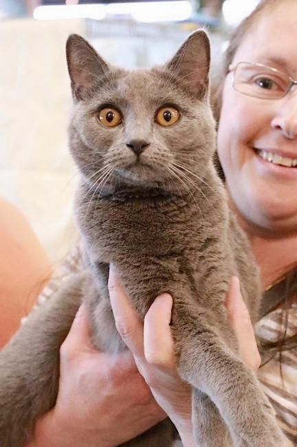 Pin Auf Animaux A Adopter En Suisse
