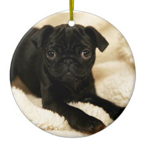 Black Pug Puppy Ceramic Ornament Zazzle Com Black Pug Puppies
