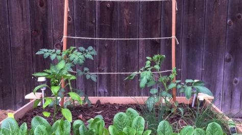 How to make a natural cat repellent to keep them out of your garden.