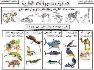 تصنيف الحيوانات الفقرية آلوسكول Image Noir Et Blanc Tunisie Drapeau College