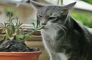 Comment Empecher Mon Chat De Manger Mes Plantes D Interieur