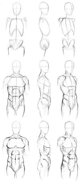 Step By Step Male Torso Reference Front Side And 3 4 View Body Drawing Anatomy Sketches Body Sketches