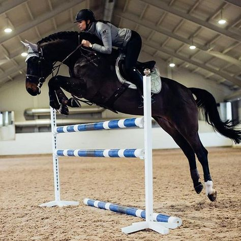 Training makes perfect! Equestrian Stoc… Training makes perfect! Equestrian Stockholm now in stock at Equestrian Performance! Equestrian Chic, Equestrian Outfits, Equestrian Fashion, Types Of Horses, English Riding, Show Jumping, Horseback Riding, Horse Riding, Dressage