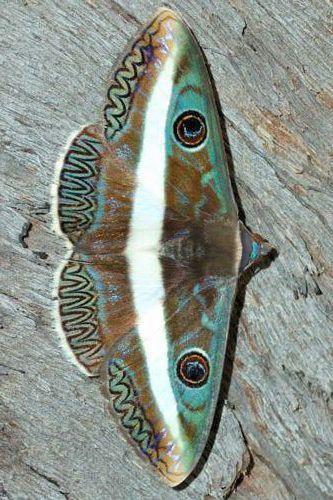 Schmetterlinge U Motten Motten Schmetterlinge In 2020