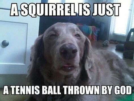 A Squirrel Is Just A Tennis Ball Thrown By God
