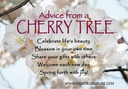 Advice From A Cherry Tree Blossom Quotes Cherry Quotes Cherry Blossom Quotes