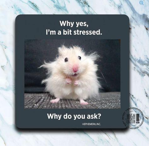 A BIT STRESSED COASTER