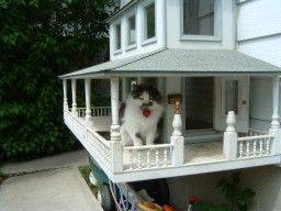 Cat house pinterest cat houses cat and animal house cat house pinterest cat houses cat and animal house malvernweather Images
