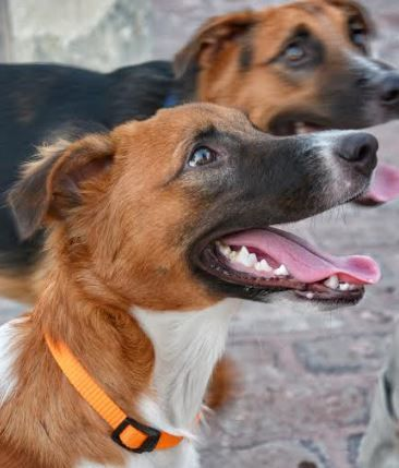 Adopt Leah On Cat Has Fleas Street Dogs Adoption