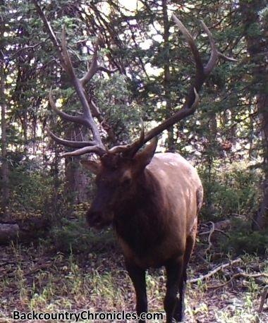 Diy Western Elk Hunt For 1 000 Budget In 2020 In 2020 Elk Hunting Elk Hunting Trips Hunting Trip