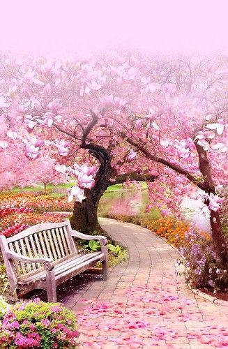 22e859aa8c6f2e2443453ebda48114f7 Nature Photography Trees Spring Landscape Beautiful Gardens