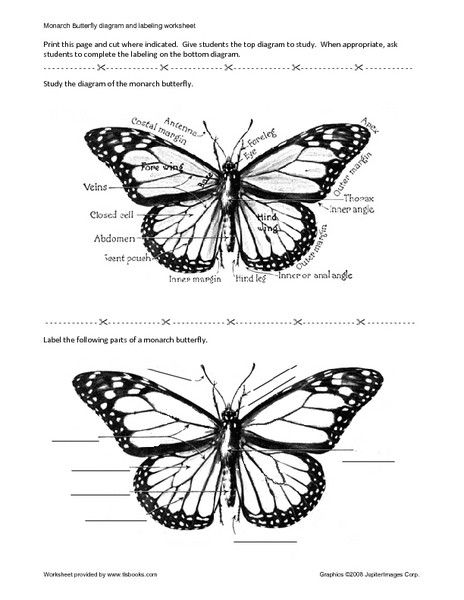 Pin By Erin Mcguire On Tattoos Monarch Butterfly Monarch Butterfly Tattoo Butterfly Back Tattoo