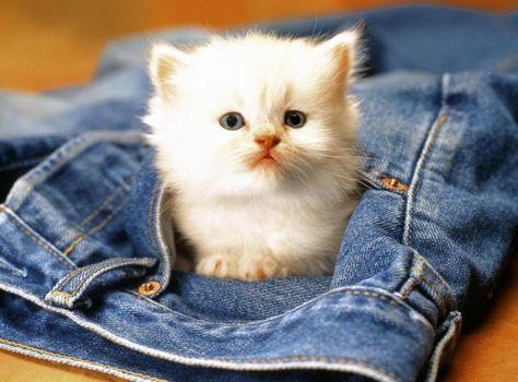Cute Baby Animal Wallpaper Widescreen 2 Hd Wallpapers Susse Baby Tiere Baby Katzen Tiere