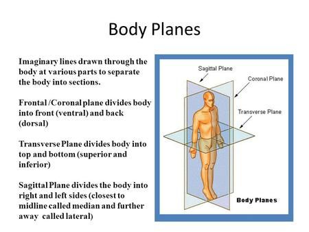 48++ Types of planes anatomy ideas in 2021