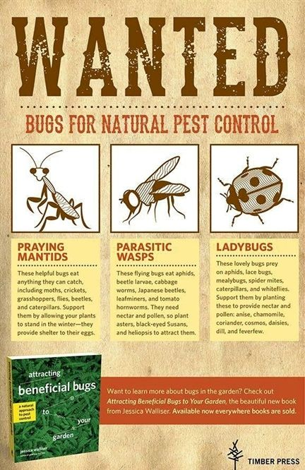 What All You Need To Know About Pest Control In 2020 Pest Control Roaches Natural Pest Control Pest Control