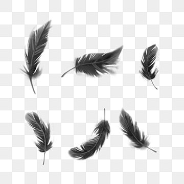 Cartoon Black Feather Element Hair With The Wind Lithe Png Transparent Clipart Image And Psd File For Free Download In 2021 Feather Background Black Feathers Crow Feather