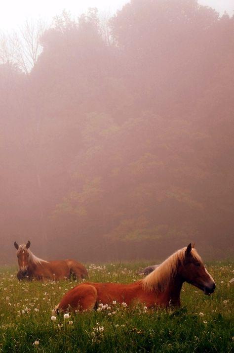 Such pretty horses! All The Pretty Horses, Beautiful Horses, Animals Beautiful, Zebras, Cavalo Wallpaper, Farm Animals, Cute Animals, Horse Love, Wild Horses