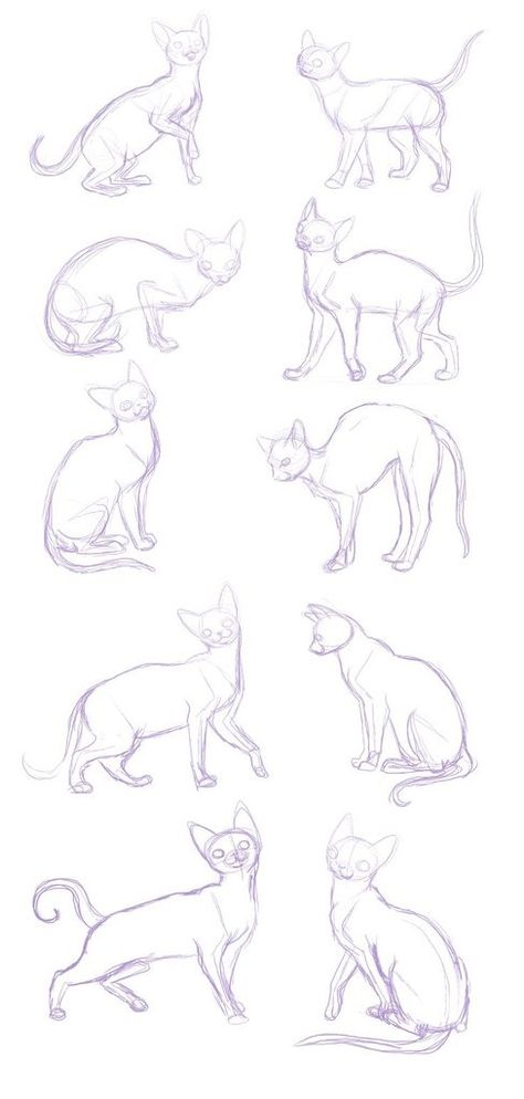 картинки туториалы коты поделюсь впечатлением