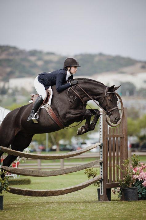 Pretty Horses, Horse Love, Beautiful Horses, Horse Girl Photography, Equine Photography, Show Jumping Horses, Show Horses, Dressage, Hunter Horse