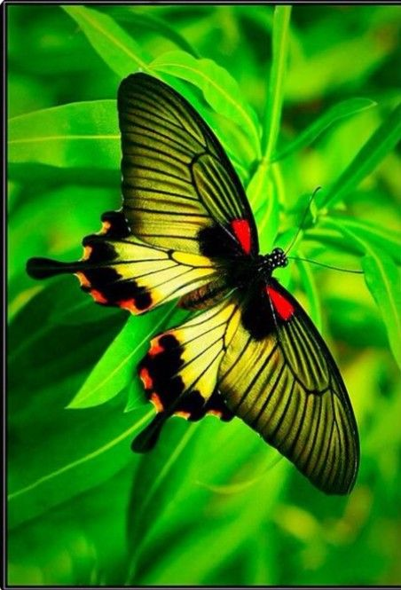 Pin By Denny Sheppard On Butterflies And Moths Beautiful Butterflies Butterfly Pictures Colorful Moths