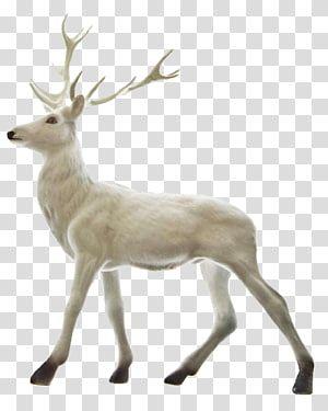 White Deer Rudolph Reindeer Santa Claus Christmas A White Deer Transparent Background Png Clipart Deer Illustration Moose Illustration Clip Art