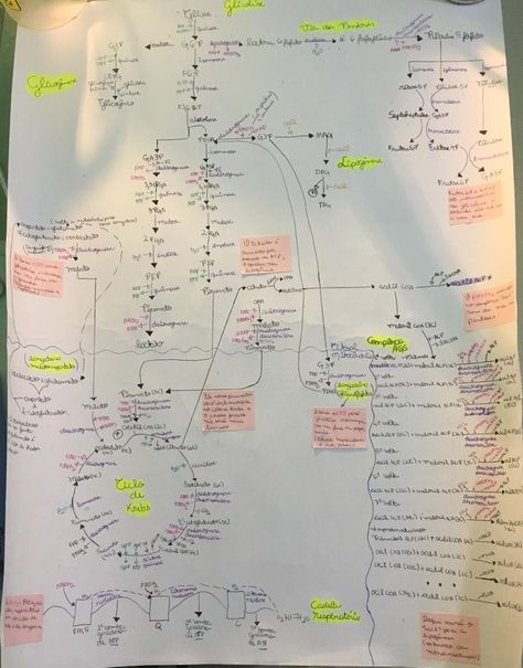 Mapa metabólico- balanço energético +