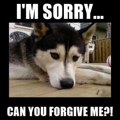 Sorry Puppy Meme
