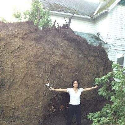 6/19/12 - Stephanie Coueignoux covering storm damage came across a uprooted tree this morning.  Check out the width of it's roots!