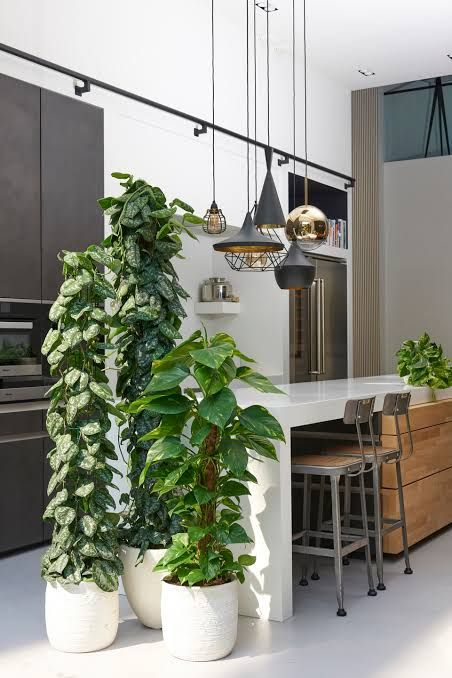 Pin By Luke Nichols On Office Re Decoration Interior Plants Plant Decor Indoor Plants