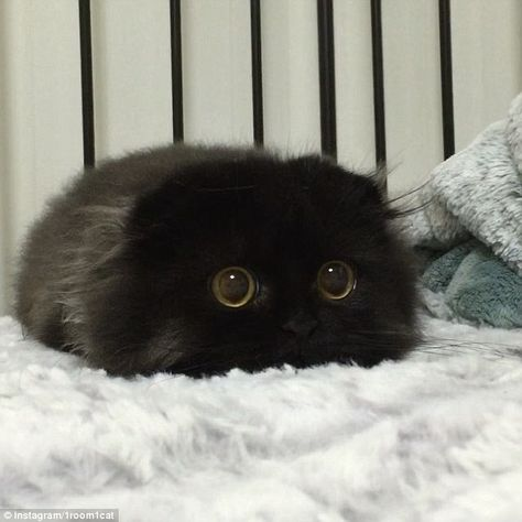 Does this cat have the most adorable eyes on the internet?