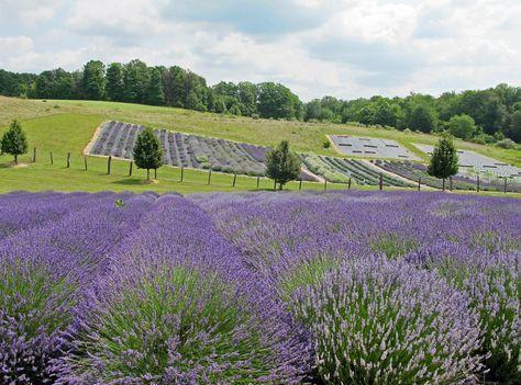 Lavender Hill Farm - Boyne City Michigan