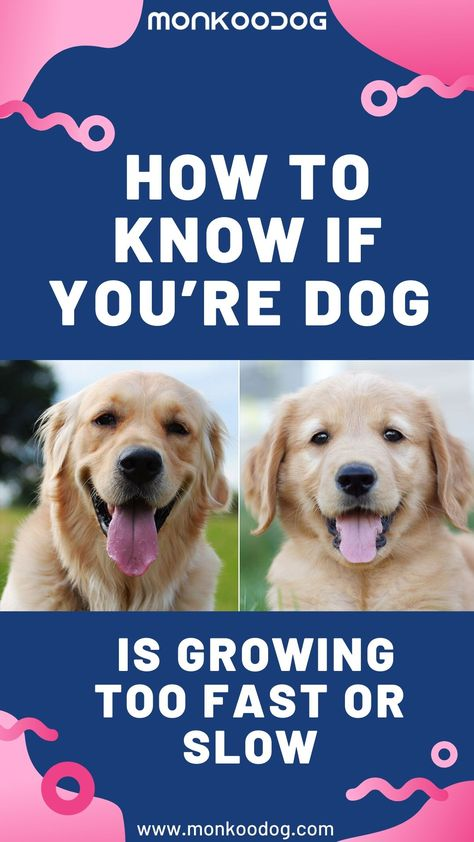 How To Know If You Re Dog Is Growing Too Fast Or Slow In 2020