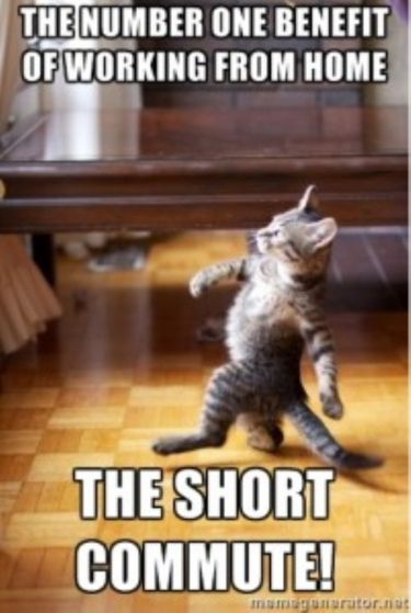 Slideshow 12 Of The Funniest Working From Home Memes Page 4 Funny Memes About Work Funniest Cat Memes Cat Memes