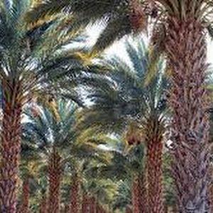 خير وشر تفسير رؤية النخل فى الحلم لابن سيرين Cactus Plants Plants Cactus