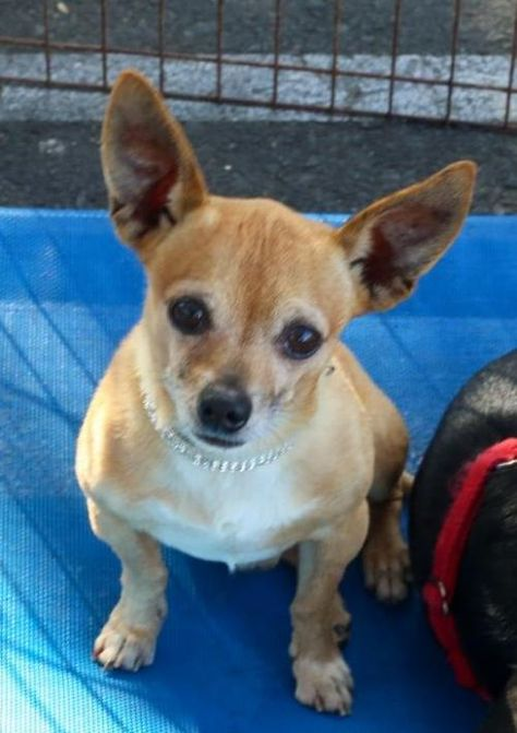 Dogs For Adoption Petfinder Dog Adoption Pet Adoption Dog Lovers