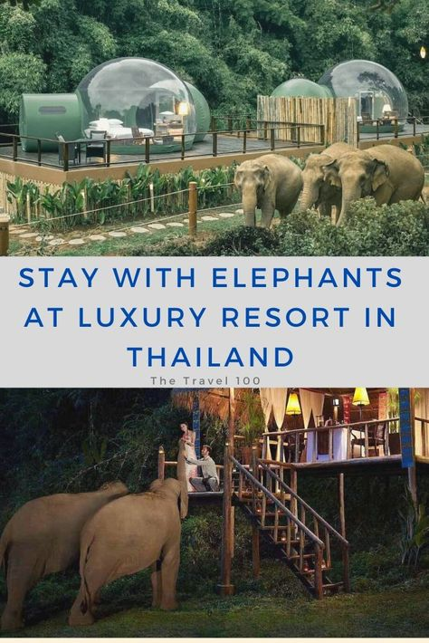 Stay with Elephants