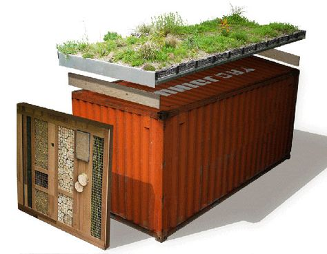 Here Green Roof Company takes shipping containers and recycles them into spaces for classrooms, home offices and sheds which has wild flowers growing on the roof and attracts birds, bees, bats and other insects.