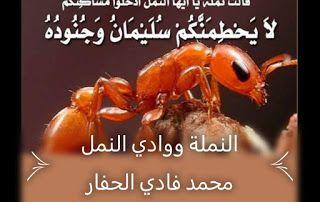 مواضيع قرآنية منوعة النملة ووادي النمل Movie Posters Blog Blog Posts